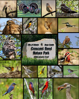 Birds of Crescent Bend